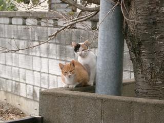 ちび猫たち